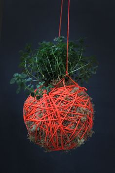 Hanging at different heights kokedama — Japanese moss balls Mister-Moss- Thyme Orange String Garden, Indoor Garden, Garden Plants, Indoor Plants, Outdoor Gardens, Herb Garden, Indoor Outdoor, Bonsai, Moss Art