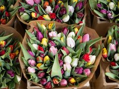 Local Flowers / Why shop local / Floral bouquet from your local flower farmer Design Floral, Deco Floral, Red Tulips, Tulips Flowers, Hydrangeas, Cut Flowers, Floral Flowers, Fresh Flowers, Amsterdam Flower Market