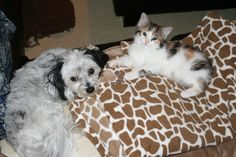 Someone stole my bed :( Cats, Bed, Animals, Gatos, Animales, Stream Bed, Animaux, Beds, Kitty