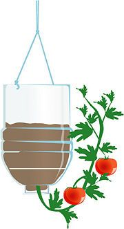 Upside down tomato plant in plastic bottle. I am going to try this.  It should be lighter than the 5 gallon bucket :-).