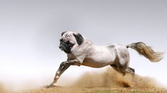 Awww if this was real it would be called a hug, a horse and a pug
