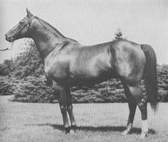 Happy Birthday to the great Whirlaway, winner of the elusive Triple Crown! Longtail, The Flying Tail, and The Half Wit. Whirlaway was one of the quirkiest horses to ever hit the track. Triple Crown Winners, Derby Winners, Seattle, Types Of Horses, Horse Silhouette, Horse Names, Sport Of Kings, Chestnut Horse, Thoroughbred Horse