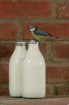 I miss getting my milk off the doorstep, I miss the glass bottles and putting them back on the doorstep for the milkman.. I miss having to shake them to mix the cream back in and I even miss the blue tits (birds) who would do this!