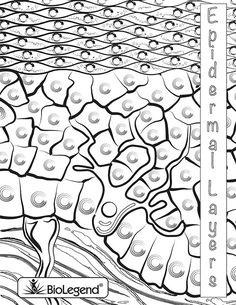 BioLegend Legendary Coloring Book | Advanced High School Science ...