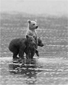 Baby bears sunday brunch, animals, teddy bears, creatur, mac, brother bear, baby bears, bear cubs, friend