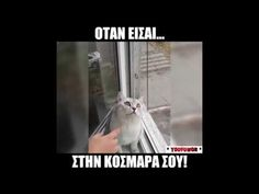 Top αστεια ελληνικα βιντεο 2017 - YouTube Tv Channels, English Quotes, Viral Videos, Cute Animals, Jokes, Actresses, Funny, Youtube, Pretty Animals