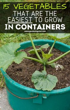 Container Gardening Vegetables, Container Plants, Vegetable Gardening, Growing Veggies, Growing Plants, Veg Garden, Lawn And Garden, Gardening For Beginners, Gardening Tips