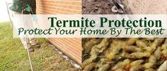 Whether you are a homeowner or commercial business owner in Lighthouse Point Florida your need for a professional inspection for Termite Control and Treatment is more urgent than for homeowners in any other area of the country. Termite Pest Control, Termite Inspection, Pest Solutions, Bug Control, Pompano Beach, Garden Guide, Protecting Your Home, Organic Gardening, Green Beans