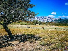 """Karibische Traumstrände, umgeben von unendlichem blauem Wasser, viele Hügellandschaften und Berge zum Erklimmen, Traumurlaub zu einem erschwinglichen Preis – so ungefähr könnte man die Traumurlaubsdestination """"Sardinien"""" in kurzen Worten beschreiben. Mountains, Nature, Europe, Photos, Sardinia, Caribbean, Water, Scenery, Naturaleza"""