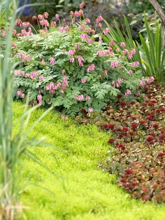 Put the Right Plants Togetherut together a stunning garden simply by creating fun plant combos. Look for great color or texture contrasts. Here, for example, the ferny, blue-green foliage of bleeding heart is a perfect contrast for the golden carpet of Irish moss. Both are accented nicely by red sedum.