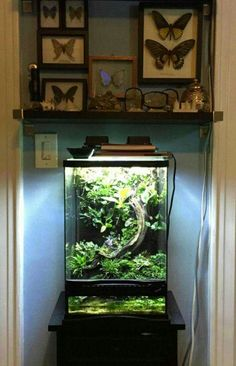 Nature cabinet and a vivarium.