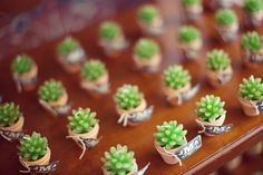 One more idea for succulents as wedding favors.
