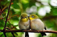 """Às margens de mim...: Formar um ninho = """" Foi um passarinho que me contou que não vale a pena desistir dos sonhos, nem esconder sentimentos. Que não é bom voar sozinho, e que todo mundo quer formar um ninho."""" — E eu, concordo com o passarinho. (Darkyn.)"""