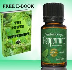 Peppermint Essential Oil 100% Pure Organic and Therapeutic Grade, Used in Aromatherapy -10 Ml Mentha Arvensis >>> Trust me, this is great! Click the image. : aromatherapy oils