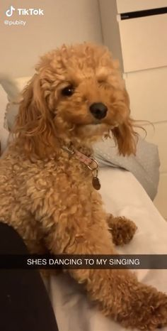 😍😍🥰 on tiktok ⬆️ - funny photo hilarious Funny Animal Jokes, Funny Dog Memes, Funny Dog Videos, Super Cute Animals, Cute Little Animals, Cute Funny Dogs, Cute Funny Animals, Cute Animal Videos, Cute Animal Pictures