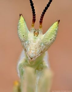 Wonderfully sharp and colorful close-up portraits of bugs