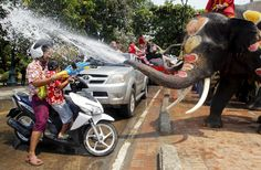 Elephants spray villagers with water during the Songkran water festival in Thailand's Ayutthaya province, north of Bangkok, on April 2015 World Elephant Day, Wild Elephant, Pictures Of The Week, Weird Pictures, Party Expert, Songkran Festival, Water Fight, Festival Celebration, Cat Memes