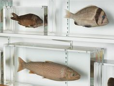 Damien Hirst - Isolated Elements Swimming in the Same Direction for the Purpose of Understanding (Right), 1991.