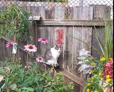 Google Image Result for http://www.christinedemerchant.com/files/catgarden/highwatch3.jpg