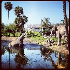 Afternoon excursion gone wrong. At the La Brea Tar Pits.