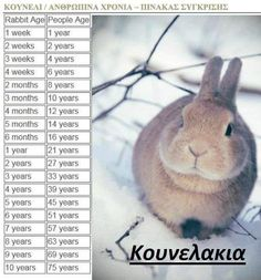 How old is your bun?