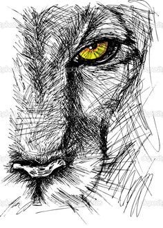 Hand drawn Sketch of a lion looking intently at the camera. Vector illustration