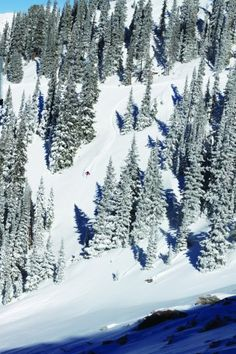 The gladed skiing at Crested Butte is extraordinary. Learn more about the resort in our 5-day vacation guide.