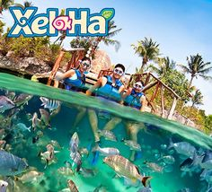 Book the best day trips in Cancun and Riviera Maya to Chichén Itzá, Tulum, Cobá or a Cenotes Tour.