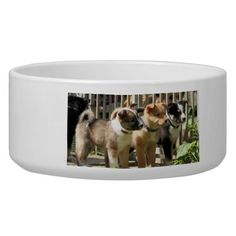 "Icelandic Sheepdogs Pet Food Bowls with the photo called: ""Three in a row""..."