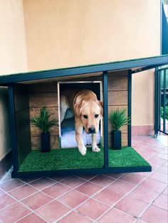 Dog Steps For Bed, Luxury Dog House, Dog Boarding Kennels, Modern Dog Houses, Dog Kennel Designs, Outside Dogs, Diy Dog Crate, Cute Dog Clothes, Diy Casa