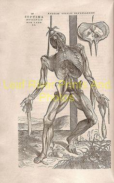 new to site Anatomy – Andreas Vesalius 1543k