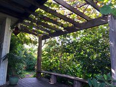 happy earths urban food forest in unanderra Australia