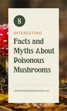 If you are a mushroom hunting beginner, one of the most important things you should know is how to identify poisonous mushrooms. There are plenty of myths about mushrooms and some of them have deadly repercussions when believed to be right. | Discover more about medicinal mushrooms at ultimatemedicinalmushrooms.com #huntingformushrooms #foragingmushrooms #mushroomfacts Poisonous Mushrooms, Edible Mushrooms, Growing Mushrooms, Stuffed Mushrooms, 8 Facts, White Mushrooms, Mushroom Hunting, Medicine, Stuff Mushrooms
