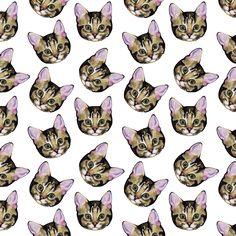 cats tumblr background - Buscar con Google