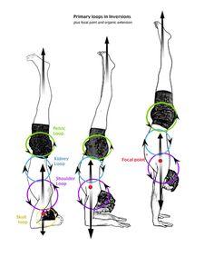 Yoga: headstand to handstand Yoga Iyengar, Ashtanga Yoga, Vinyasa Yoga, Yoga Inversions, Yoga Sequences, Handstands, Yoga Headstand, Pranayama, Namaste Yoga