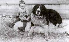 Newfoundland Dog - Historical