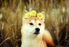 Красивые фотографии собак