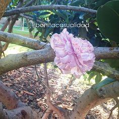 Accesorios para el pelo: Diadema PEONÍA de metal dorado con flor de raso color rosa nude.