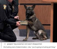 When they found this law-enforcing dog. | 36 Times Tumblr Proved It Was The Funniest Place On The Internet