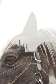 An open mind double exposure of horse and road Double Exposure Photography, Levitation Photography, Surrealism Photography, Equine Photography, Photoshop Photography, Underwater Photography, Creative Photography, Photography Ideas, Horse Photos