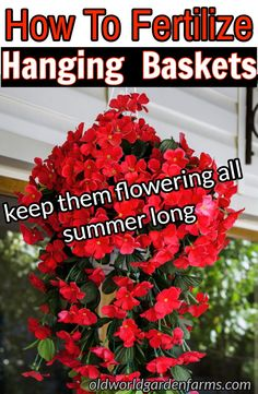 Fertilize Hanging Baskets to keep them flowering all summer long.To Fertilize Hanging Baskets to keep them flowering all summer long. How To Fertilize Hanging Baskets to keep them flowering all summer long. 10 Great Plants for the Front of Your House Hanging Plants Outdoor, Plants For Hanging Baskets, Outdoor Flowers, Hanging Flowers, Container Flowers, Container Plants, Succulent Containers, Gardening For Beginners, Gardening Tips