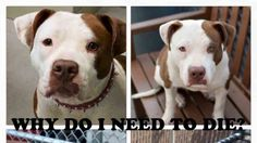 """Petition · Manhattan Animal Center of NYC (ACC): WE WANT THE CENTER TO CHANGE THEIR """"KILL DOG POLICY""""! NO MORE EUTHANIZED DOGS! · Change.org"""
