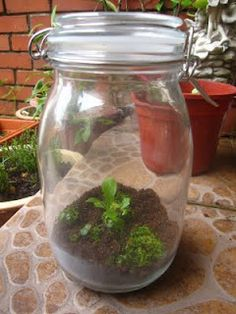 DIY Mini Rainforest in a Jar!!