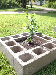 Inexpensive raised flower bed- plant flowers in the blocks for decorative edging