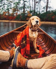 Astonishing Everything You Ever Wanted to Know about Golden Retrievers Ideas. Glorious Everything You Ever Wanted to Know about Golden Retrievers Ideas. Cute Puppies, Cute Dogs, Dogs And Puppies, Doggies, Animals And Pets, Cute Animals, Animals Photos, Autumn Aesthetic, Golden Retrievers