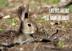Es Madrid no Madrid Magazine Fauna, Madrid, Natural, Animals, Rabbits, Animais, Animales, Animaux, Animal