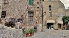 """""""Welcome in San Casciano, Renato!"""" - Taken in San Casciano dei Bagni. (Toscana, Italia). Samsung Galaxy S5 and Olloclip Lens (wide angle). (October 2016)"""