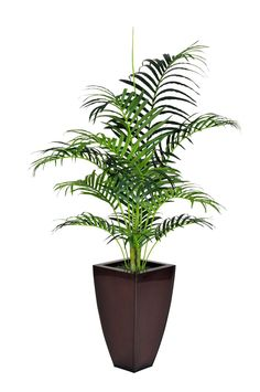 House of Silk Flowers Artificial Areca Palm in Zinc Planter, 5-Feet -- To view further for this item, visit the image link.