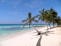 Hopefully see you during winter term! Dover Beach, Barbados