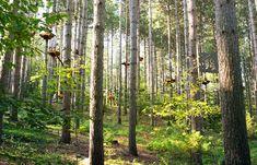 Treetop Trekking :: Coming to Brampton next month!!